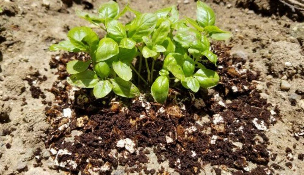 Learn How To Grow Your Garden With Egg Shells And Coffee Grounds